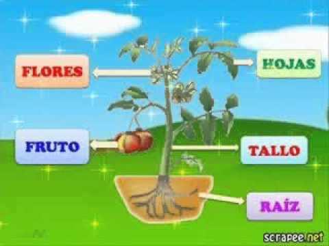 Las partes de la planta escuela la milagrosa educando for Un arbol con todas sus partes